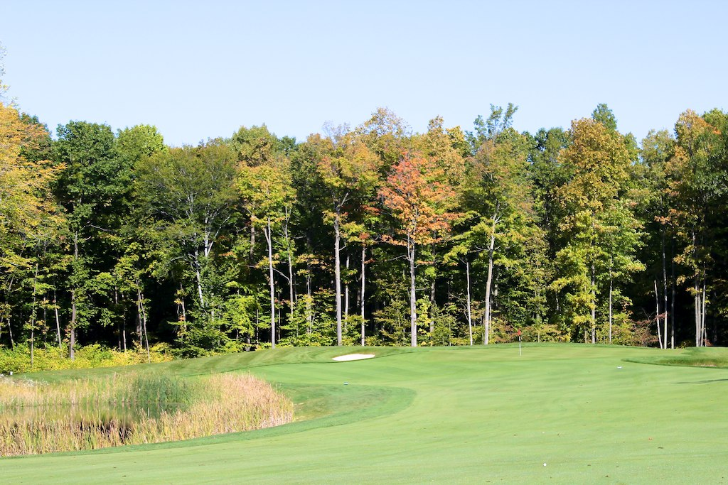 #7 Trees Behind the Green